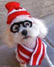 Where is Waldo