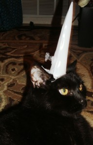 Loki the Unicorn