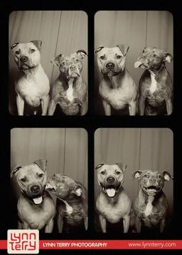 Dog Photo Booth