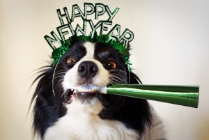 new year dog